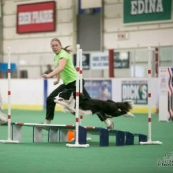 Agility Practice (Experienced Handlers)