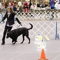 Rally/Obedience Trial Info and Premium