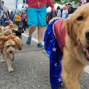 Dogs on Parade! (cancelled due to weather)